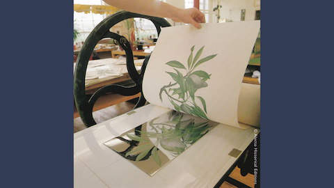Gallery talk on Joseph Banks' Florilegium (part II)